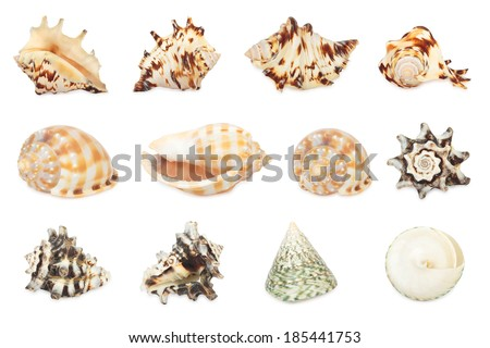 Set of shell. All in focus. High res. Isolated on a white background - stock photo