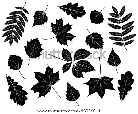 Set of silhouettes of leaves. Maple, oak, mountain ash, birch, aspen, wild grapes, poplar and hawthorn. Isolated on white. - stock photo
