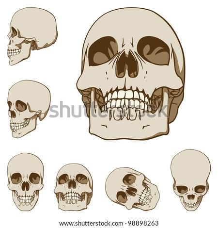 Set of Six Drawings of Human Skull. Rasterized Version - stock photo