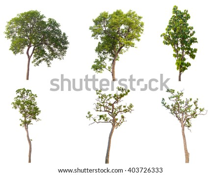 set of six green trees isolated on white background - stock photo