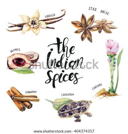 set of spice, drawing by watercolor, hand drawn illustration. Watercolor hand drawn illustration with different spices - stock photo
