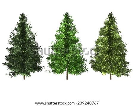 set of spruce tree isolated on white background - stock photo