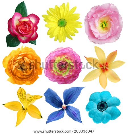 Set of sweet flowers - stock photo