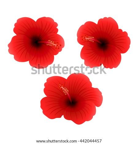 Set of three red Hibiscus isolated on white background, beautiful Hawaiian flowers, illustration. - stock photo