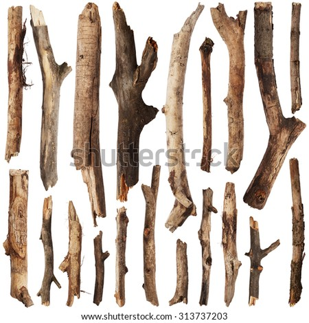 Set of tree branches isolated on white background - stock photo