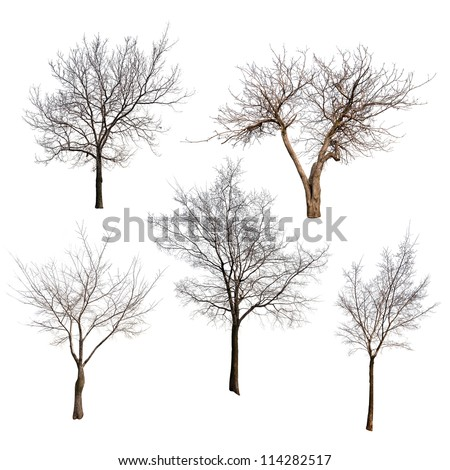 set of trees without leaves isolated on white background - stock photo
