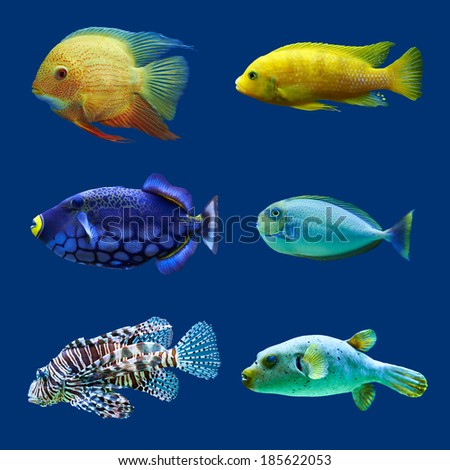 Set of tropical fish. Isolated on blue. Hight res. - stock photo