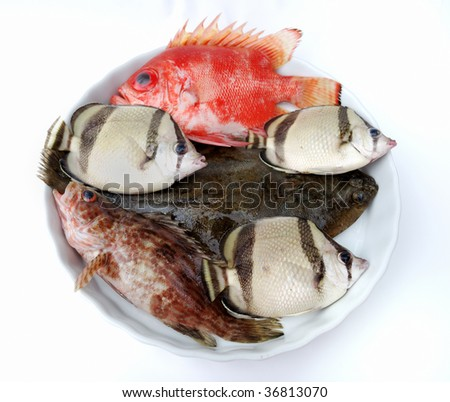 Set of tropical fishes on white plate on white background - stock photo