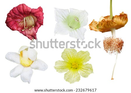 Set of tropical spice and fruit isolated on white background - stock photo