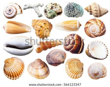 set of various mollusk shells isolated on white background - stock photo