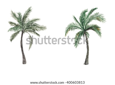 Set of Watercolor painting palm trees isolated on white background - stock photo