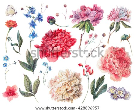 Set of watercolor white, pink, red peonies garden flowers separate flower, leaf sprigs, isolated watercolor illustration on white Natural watercolor summer design floral elements, botanical collection - stock photo