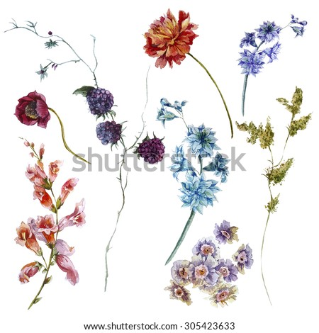 Set of watercolor wildflowers, sprigs separately leaves flower, isolated watercolor illustration. - stock photo