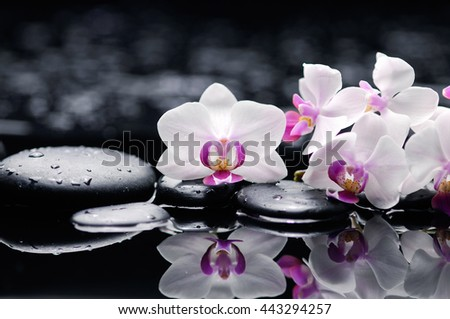 Set of white orchid with therapy stones  - stock photo