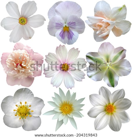 Set of white spring  flowers - stock photo
