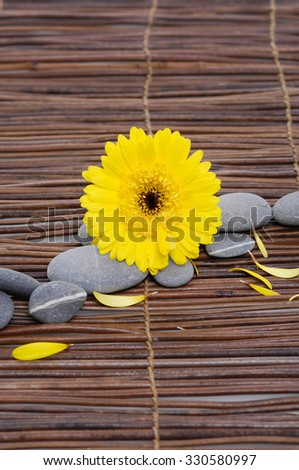 Set of yellow gerbera with gray stones on mat  - stock photo