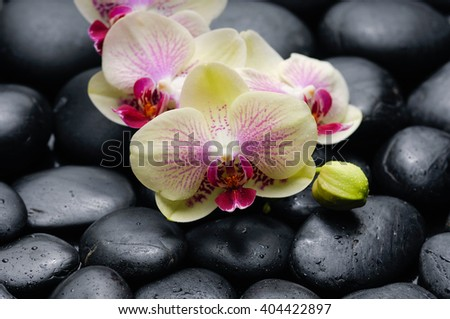 Set of yellow orchid on pebbles background - stock photo