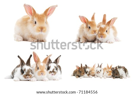 set of young baby light brown rabbits with long ears isolated on white - stock photo
