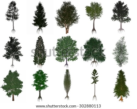 Set or collection of common trees isolated in white background - 3D render - stock photo