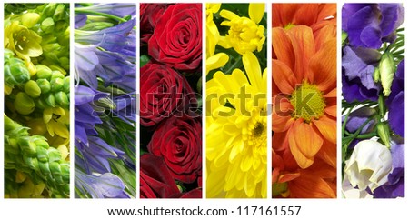 Set pictures of flowers - stock photo