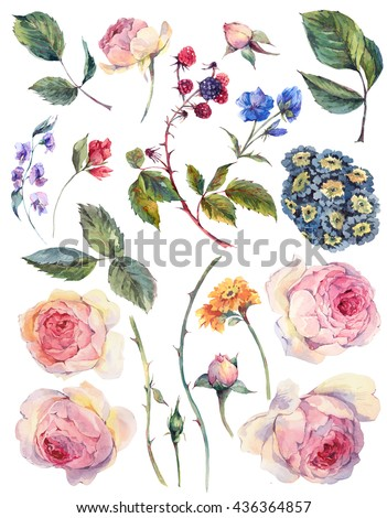 Set vintage watercolor elements of English roses leaves branches flowers and wildflowers, watercolor illustration isolated on white background - stock photo
