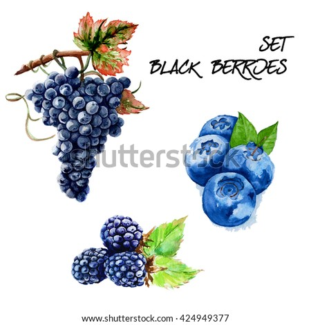 Set with black grapes, strawberries and blackberries. isolated. hand-painted watercolor - stock photo