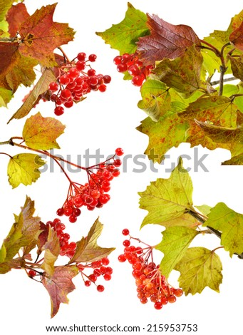 Set with viburnum berries and leaves isolated on white 2 - stock photo