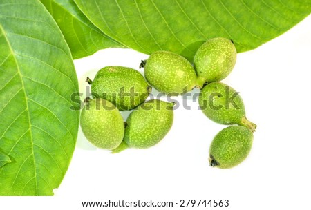 Seven green young walnuts in husks with walnuts leaves on white background - stock photo
