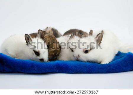 Seven little rabbits in Santa Claus hat - stock photo