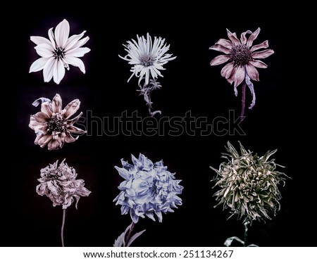 Seven sample of dark flower, stylized, sepia.  Black background  - stock photo