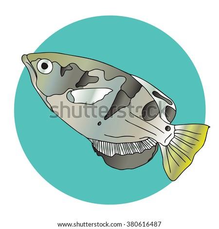 Seven-spot Archerfish - stock photo