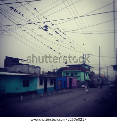 Several birds and shoes on a power line over several buildings. - stock photo