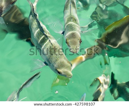 Several fish at the surface of the ocean in turquoise tropical water at Saint Anne Marine National Park, Seychelles - stock photo