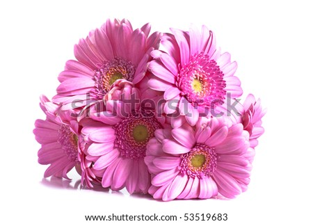 Several gerberas on white background - stock photo