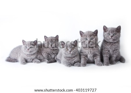Several kittens lying and looking at the camera (isolated on white) - stock photo