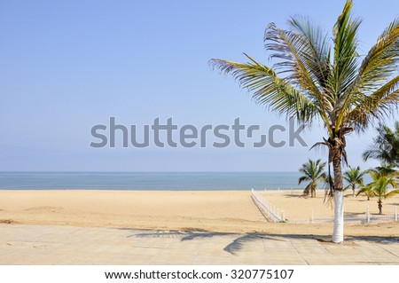 Several Palm Trees Growing on a Lovely Beach in Angola, Southern Africa  - stock photo