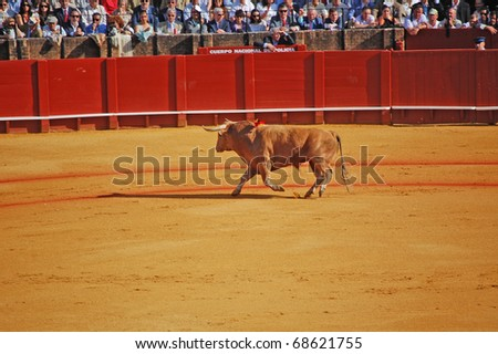 SEVILLE - APRIL 30:  A brown bull circles the stadium looking at the sold out crowd at the Plaza de Toros de Sevilla April 30, 2009 in Seville, Spain. - stock photo