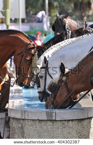 SEVILLE, SPAIN-MAY 4: horse drinking water in fair of Seville on May 4, 2011 in Seville - stock photo