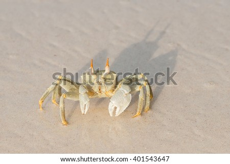 seychelles ocypode ceratophthalmus also called ghost crab  - stock photo
