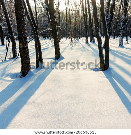 shade in winter deciduous forest  - stock photo