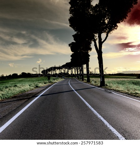 Shade of the Trees on a Paved Road in Tuscany at Sunset, Toned Picture - stock photo