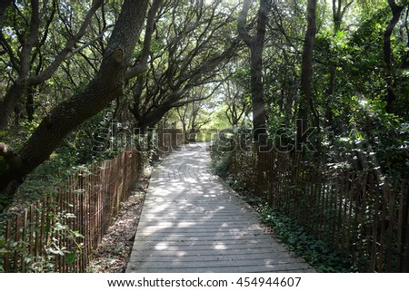 shade path in woods with sun light coming through - stock photo