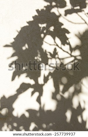shadow of a fig tree on a wall - stock photo