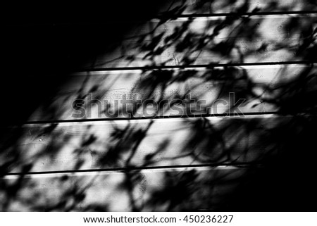 Shadow of blooming tree branches on the wooden floor - stock photo