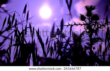 Shadow of grasses and wild flowers under the sun of dawn, color effect image - stock photo