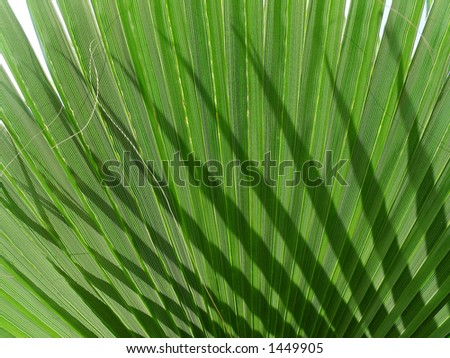 shadow of palm - stock photo