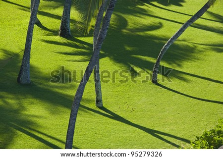 Shadow of palm tree on lush green lawn - stock photo