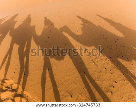 shadows of camels in the sahara - stock photo