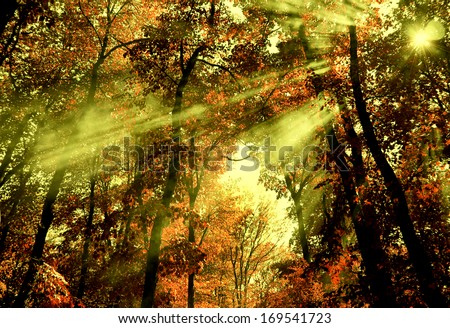 Shafts of light through forest trees. - stock photo