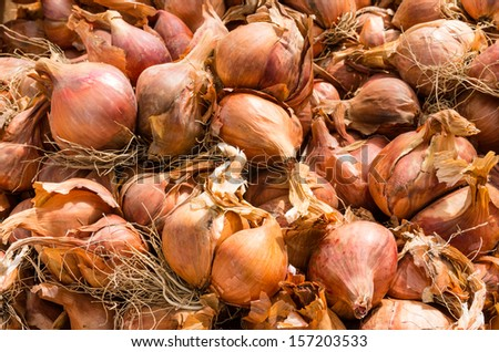 Shallots on display at the local farmers market - stock photo